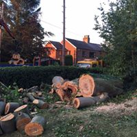 Tree Felling Hazel Grove