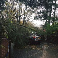 Tree Cutting Cheadle
