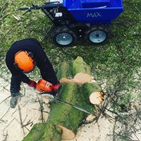 Commercial Tree Surgeon Cheshire
