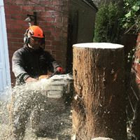 Commercial tree surgeon Manchester