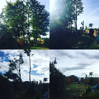 Beech Tree Removal Stockport
