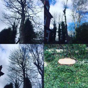Tree Surgeons Manchester
