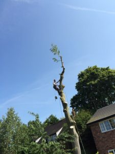 Tree Felling Stockport