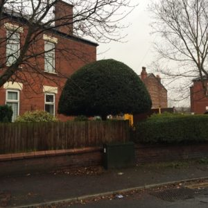 Tree reshaping Stockport