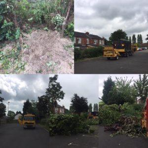 Removing problem trees Stockport
