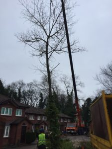 Removing problem trees Wilmslow