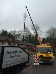 Tree Removal Wilmslow