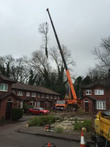 Tree Surgeon Company Wilmslow