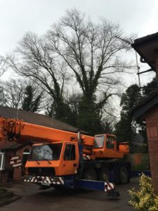 Tree Surgeon Wilmslow