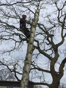 Tree Surgery Bramhall