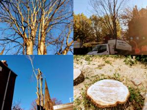 Tree work Cheshire