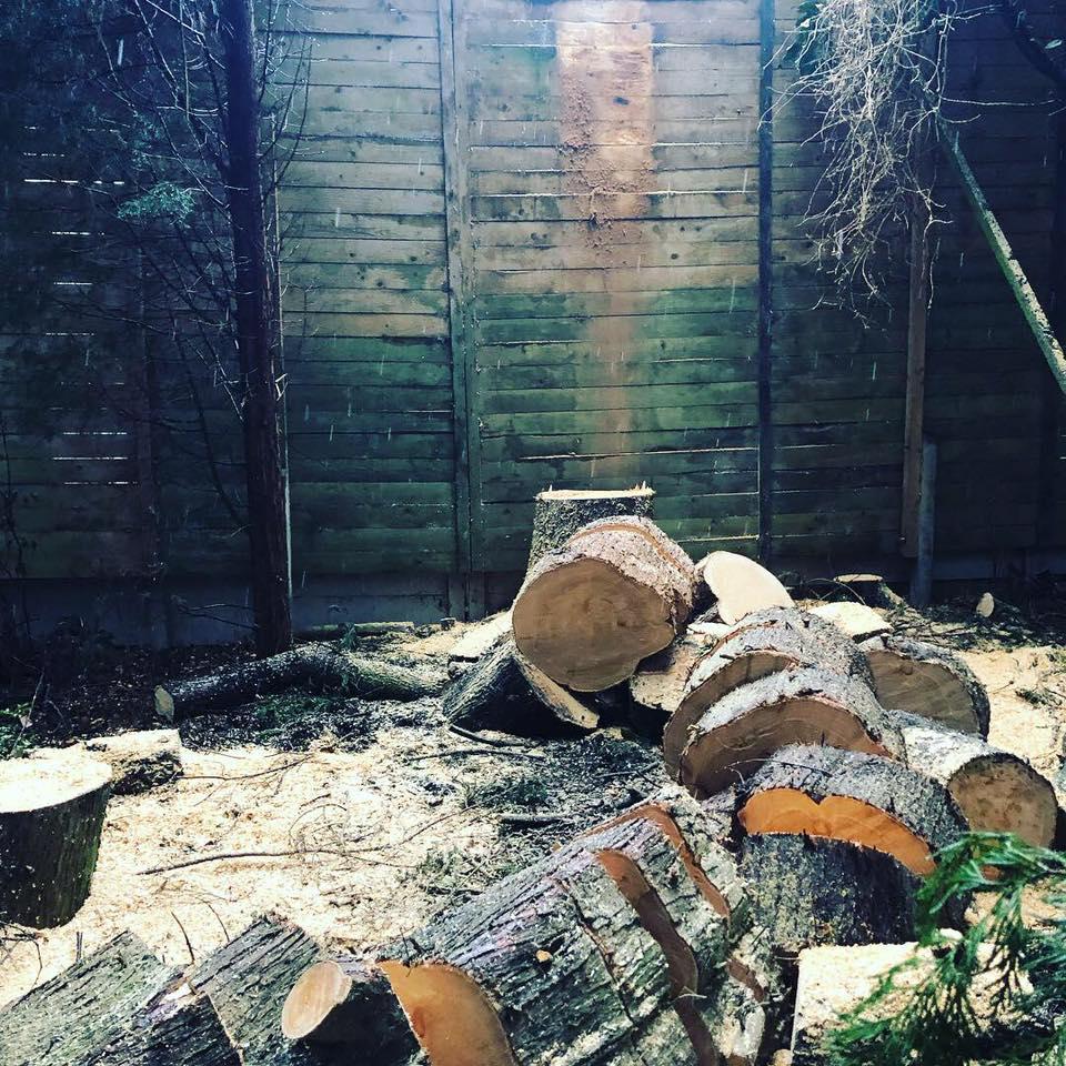 Problem Tree Cheshire