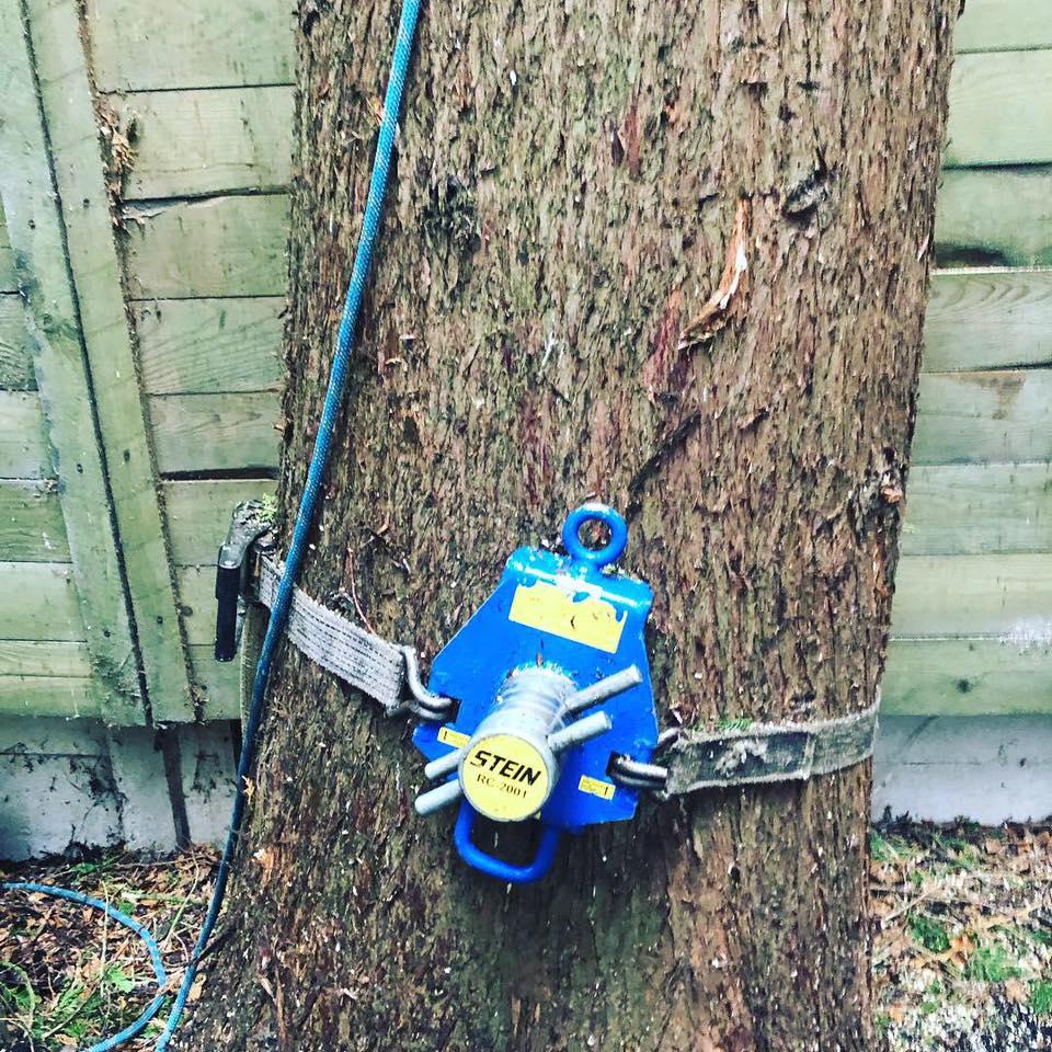 Problem Tree Wilmslow