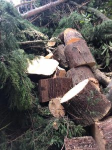 Tree Surgery Services Wilmslow