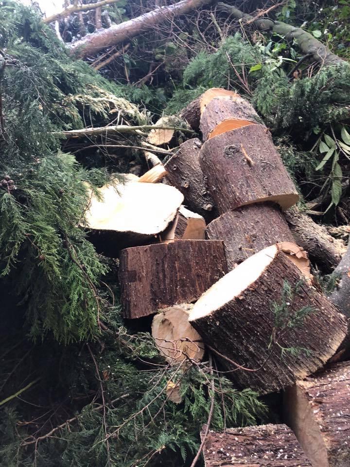 Problem Trees Wilmslow