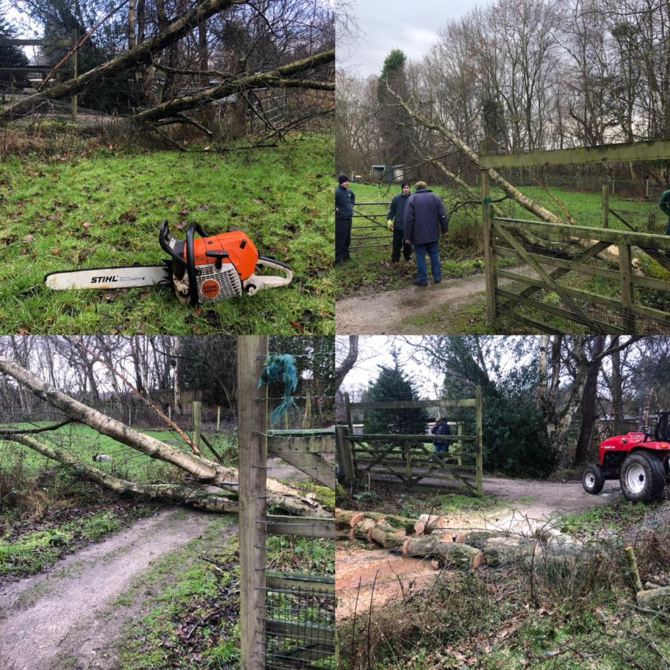 Removing Fallen Trees Cheshire