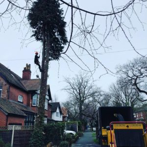 Removing trees Cheshire