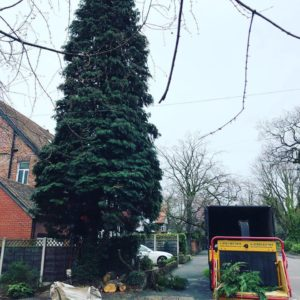 Tree Removal Stockport