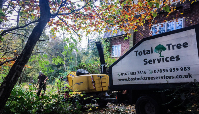 Tree Services Alderley Edge