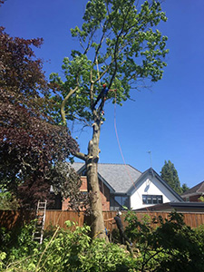 Tree Surgeon Alderley Edge