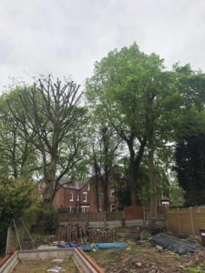Local tree surgeons Davenport Park