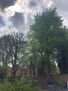 Overgrown Trees Davenport Park