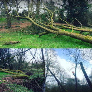 Tree Services Stockport