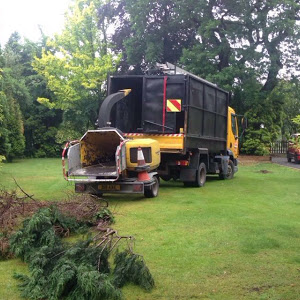 Tree Removal Alderley Edge