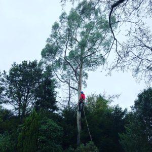Tree Removal Prestbury