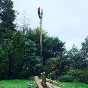 Tree Surgeons Prestbury