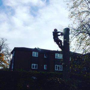 Removing problem trees Hazel Grove