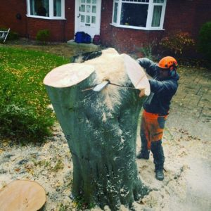 Tree Surgeon Hazel Grove