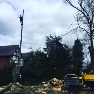 Tree Surgeons Hazel Grove