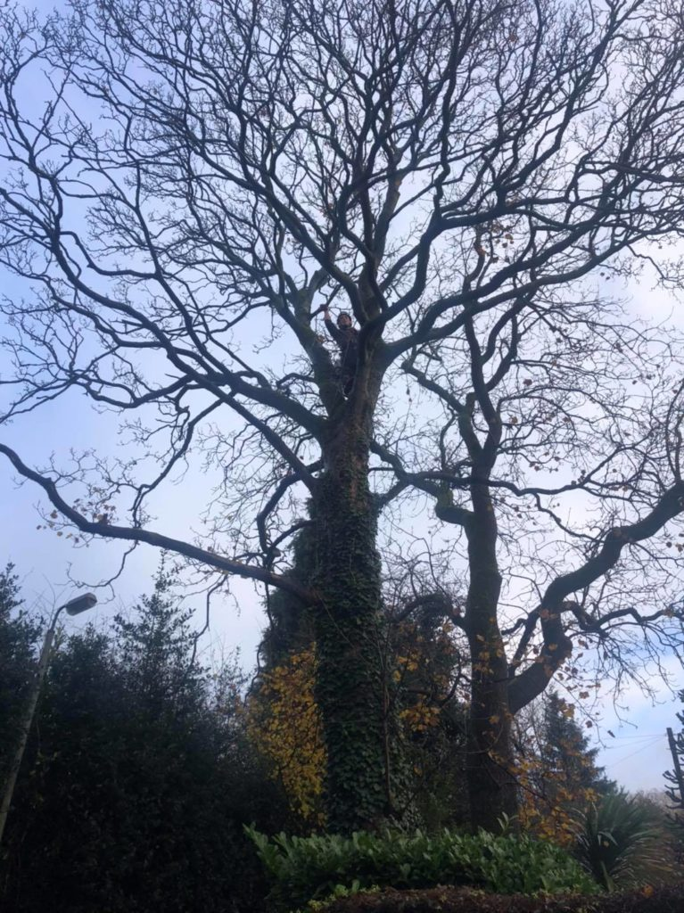 Tree Surgeons Stockport
