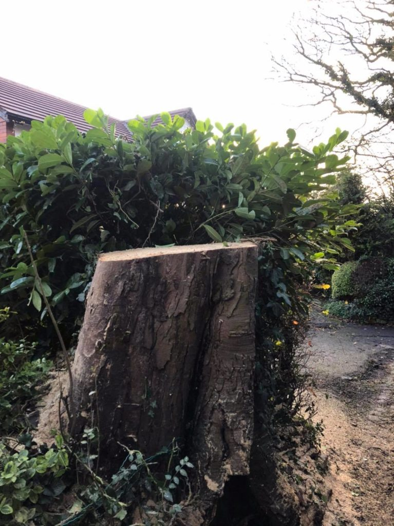 Tree Surgery Stockport